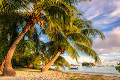 Palms at sunrise, Anse Volbert beach on Praslin island royalty free stock photo