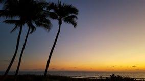 Palms and sunrise. Beautiful colorful sunrise Royalty Free Stock Photography