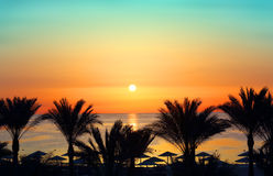 Palms and sunrise over sea Royalty Free Stock Image