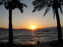 Palms sunset. Sunset on the sea of galilee and palms Royalty Free Stock Photos