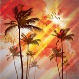 Palms at sunset Stock Photo