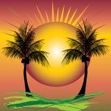 Palms sunset Stock Image