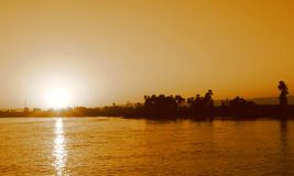Palms in the sunset. Sunset on the shore of the Nile in sepia Stock Photography