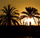 Palms and sunset. The palms and the sunset in Barcelona in the evening, Spain Royalty Free Stock Photo