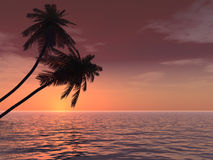 Palms_Sunset_Deep Stock Afbeelding