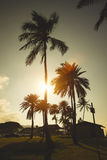 Palms in sunset at Haleiwa, Oahu North Shore, Hawaii Royalty Free Stock Photos