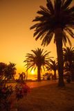 Palms at sunset Royalty Free Stock Photography
