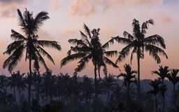 Palms and sunset. The picture was taken on the Bali island Stock Photo