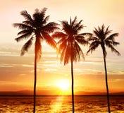 Palms at sunset Royalty Free Stock Photo