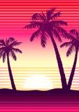 Palms at sunset Stock Photos