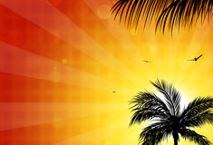 Palms Sunset Royalty Free Stock Photography