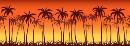 Palms sunset Royalty Free Stock Photos