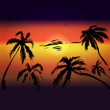 Palms and sunset vector background for text, tourism, leisure, s Stock Photos