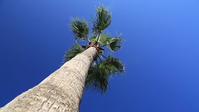 Palm trees against the blue sky. Palms swaying in the wind against the blue sky stock video