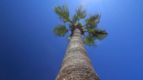 Palm trees against the blue sky. Palms swaying in the wind against the blue sky stock video footage