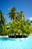 Palms and swimming pool Stock Image