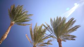Palm trees sway from the wind on the beach. Close up. Palms swing from the wind on the beach, in the background an open blue ocean. Close up stock footage