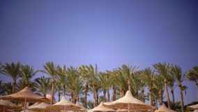 Palms swing in the wind near the straw umbrellas. The weather for rest and relaxation stock footage