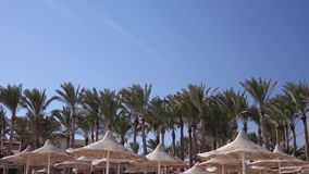 Palms swing in the wind near the straw umbrellas. The weather for rest and relaxation stock video