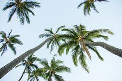 The Palms stock images