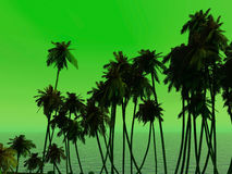 Palms tops Royalty Free Stock Photography