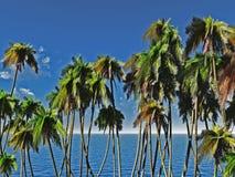 Palms tops Stock Photos