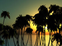 Palms tops Stock Photo