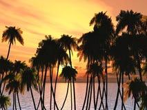 Palms tops Royalty Free Stock Photos