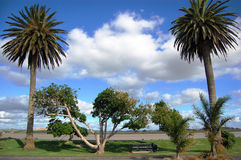 Palms at town park. Dargaville, New Zealand Stock Images