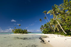 Palms tree above sandy and rocky beach, Aitutaki Royalty Free Stock Image