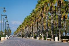 Palms tree avenue Stock Image