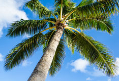 Palms tree background Royalty Free Stock Images