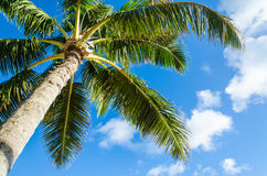 Palms tree background Royalty Free Stock Image