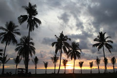 Palms tree on the background of the colorful sunset and cloudy sky on a beach. Stock Photography