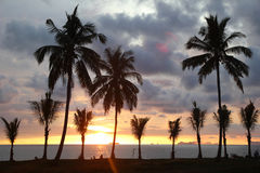 Palms tree on the background of the colorful sunset and cloudy sky on a beach. Royalty Free Stock Photos
