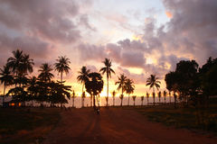 Palms tree on the background of the colorful sunset, cloudy sky and a sea. Royalty Free Stock Photo