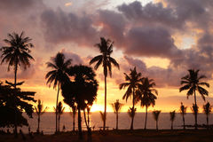 Palms tree on the background of the colorful sunset, cloudy sky and a sea. Royalty Free Stock Images