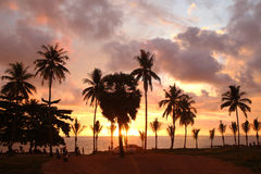 Palms tree on the background of the colorful sunset, cloudy sky and a sea. Royalty Free Stock Photos