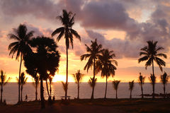 Palms tree on the background of the colorful sunset and cloudy sky. Royalty Free Stock Photos
