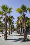 Palms tree esplanade Royalty Free Stock Images