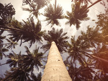Palms tree and sky. Royalty Free Stock Photography
