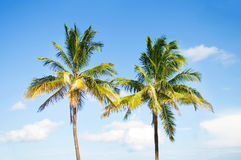 Palms trees on the beach Stock Photo