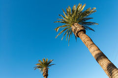 Palms trees on the beach during Royalty Free Stock Image