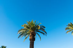 Palms trees on the beach during Stock Photography