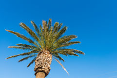Palms trees Royalty Free Stock Photos