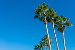 Palms trees Royalty Free Stock Photo