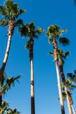 Palms trees on the beach during Royalty Free Stock Images