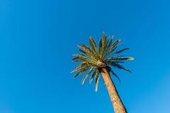 Palms trees Stock Image