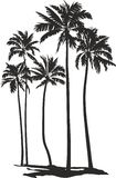 Palms trees-five palms trees Royalty Free Stock Image