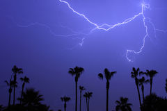Palms Trees and a Lightning Thunder Storm. Tropical  Lightning Thunder Storm, with palm trees and blue night sky Royalty Free Stock Image